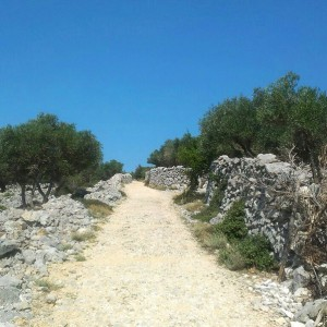 Shepherd's paths
