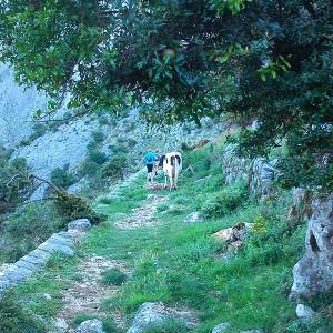 Kotor Hiking