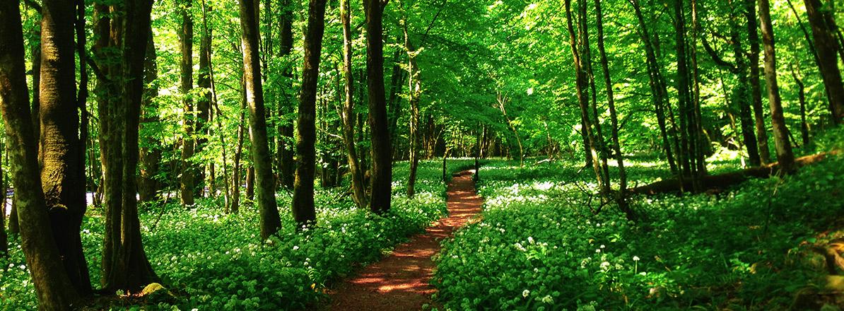 green-paths-main